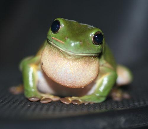 Keeping Pools Frog Free Splash Magazine