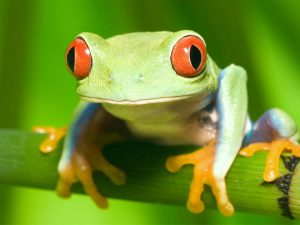 Frogs can be an annoyance in swimming pools